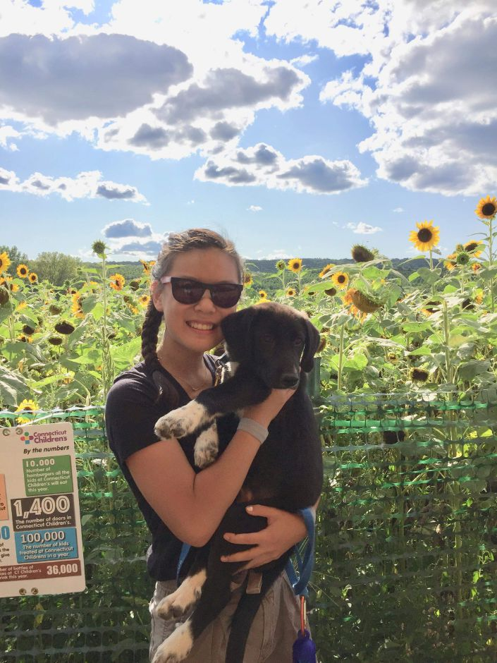 A 2019 Cheshire High School  grad, Cali Lonardelli holds her dog, Mozi, at a sunflower maze. Photo courtesy of Cali Lonardelli