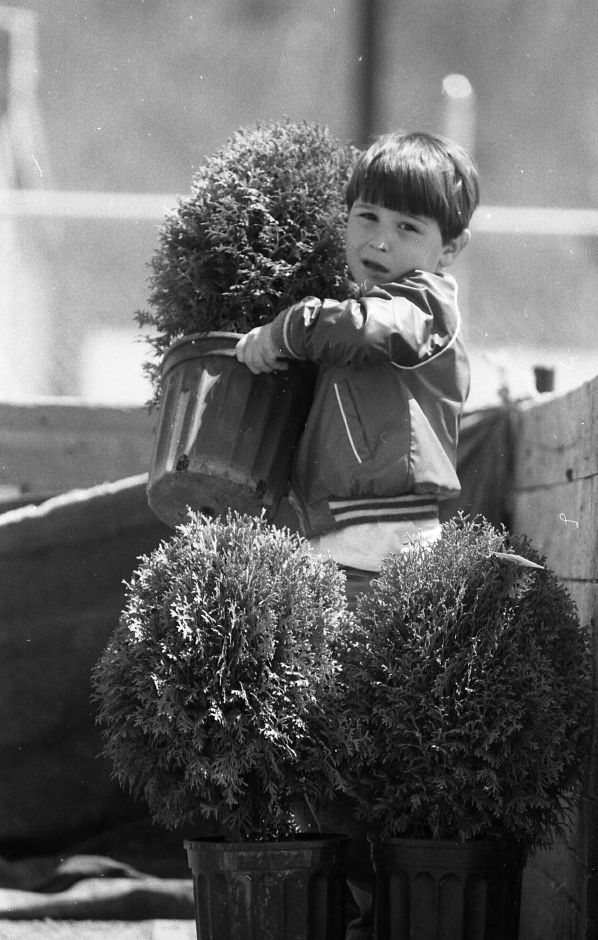 RJ file photo -Mark Skirkanich, 5, struggles to lift a shrub onto his father