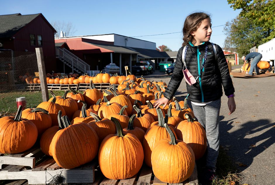 Ella Corso, 8, of Cheshire, picks out a pumpkin while shopping with family at Old Bishop Farm, 500 S. Meriden Rd., Cheshire, Wed., Oct. 14, 2020. Dave Zajac, Record-Journal