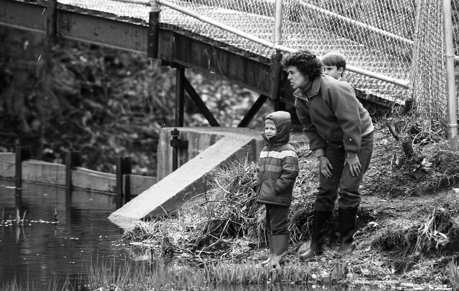 RJ file photo - Helen Stowe and her son Eddie, 4, left, and his friend Matthew Dormandy, 4, look along the shore of the pond at Doolittle Park for a muskrat they saw in the water April 10 1989.