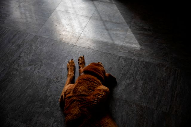 Copper, the family bloodhound, lays on the floor in the VanDerzee home where Sgt. James Johnston once lived with his wife, the family