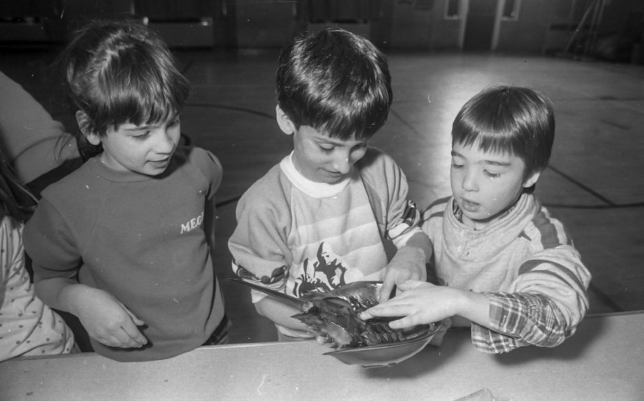 RJ file photo - Students at Moses Y. Beach School take a look at a horseshoe crab April 1989.