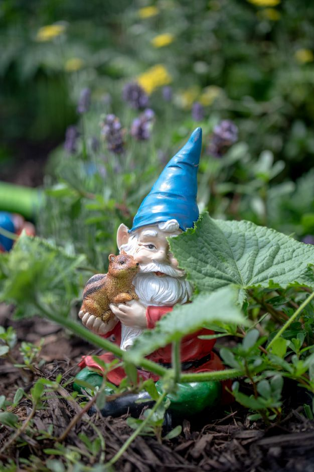 A garden gnome in the Wallingford Community Garden on July 13, 2020. The garden has been seeing a surge in activity this year as growers find themselves with more time during quarantine. | Devin Leith-Yessian/Record-Journal