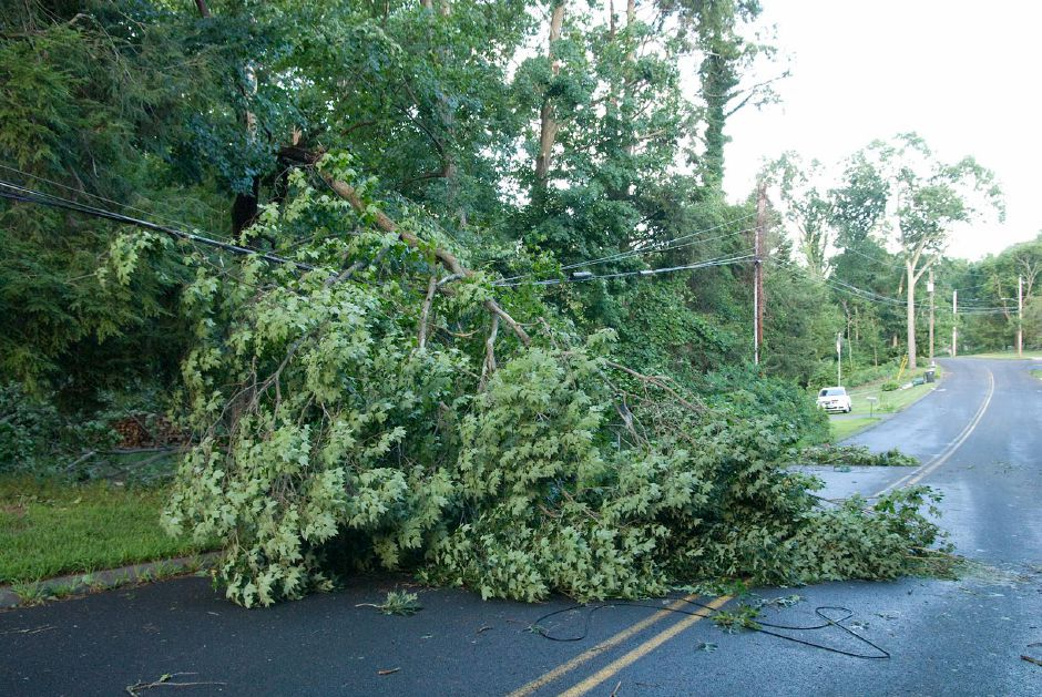 Downed tree in Cheshire after Tropical Storm Isaias. Photo taken by Al Valerio
