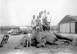 Children stand on top of and around Miss India, a circus elephant that was buried in Wallingford in July 1953. The photo was taken by Ralph D. Habersang, a firefighter who retired as fire chief in 1976. Courtesy of Mark Habersang