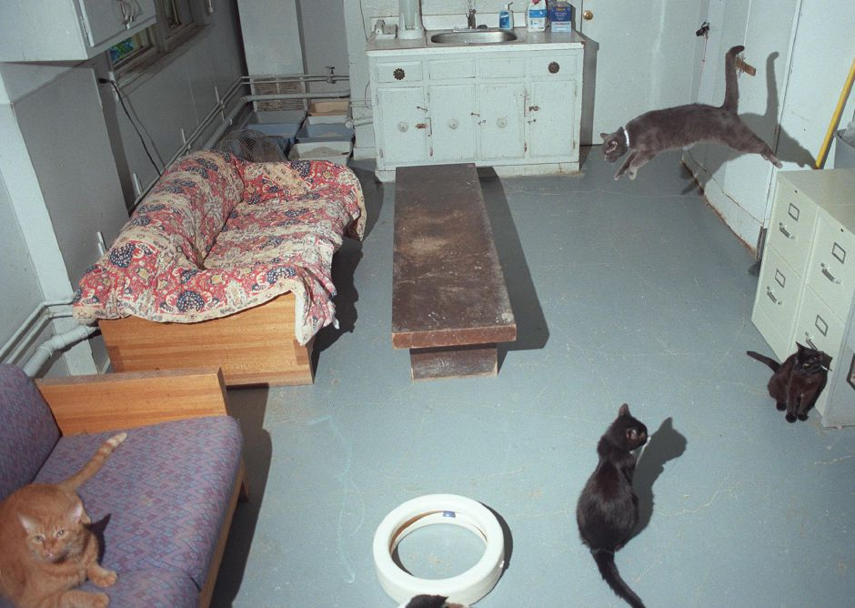The cat room at the Meriden Humane Society on Oregon Road in Meriden, July 7, 1999.