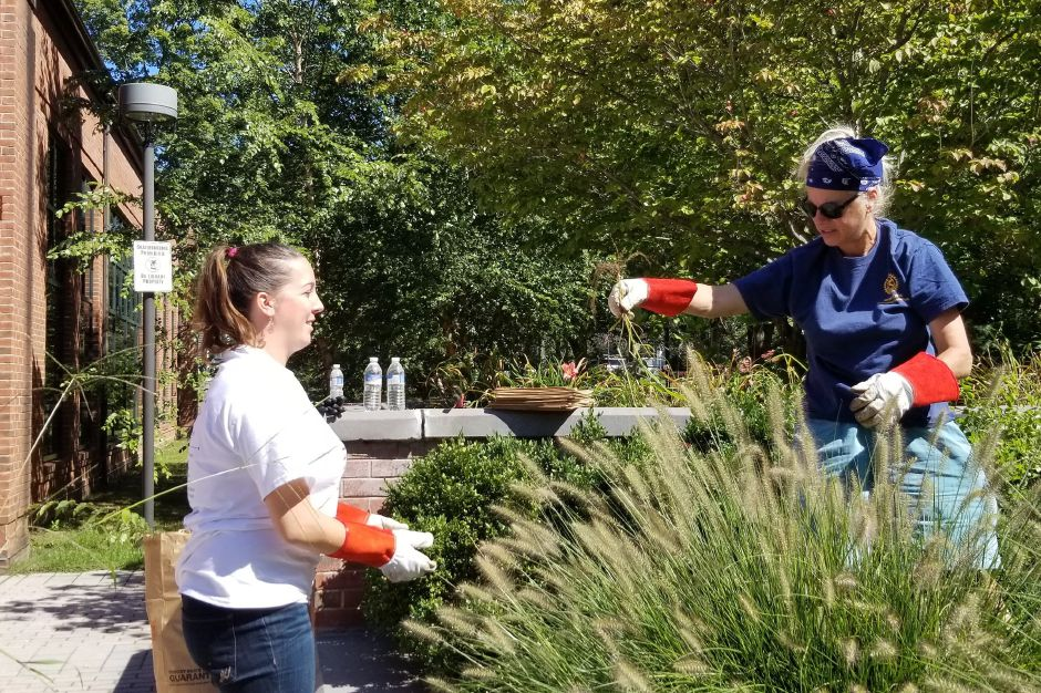 Lori Cooke-Marra and Brittany Barbaro clear weeds in front of the Wallingford Public Library during the United Way Day of Caring Sept. 17, 2019. | Jeniece Roman, Record-Journal.