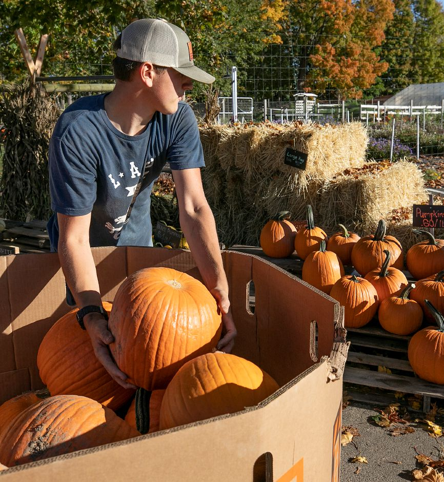 Worker Matthew Beland, 16, stacks a variety of pumpkins at Old Bishop Farm, 500 S. Meriden Rd., Cheshire, Wed., Oct. 14, 2020. Dave Zajac, Record-Journal