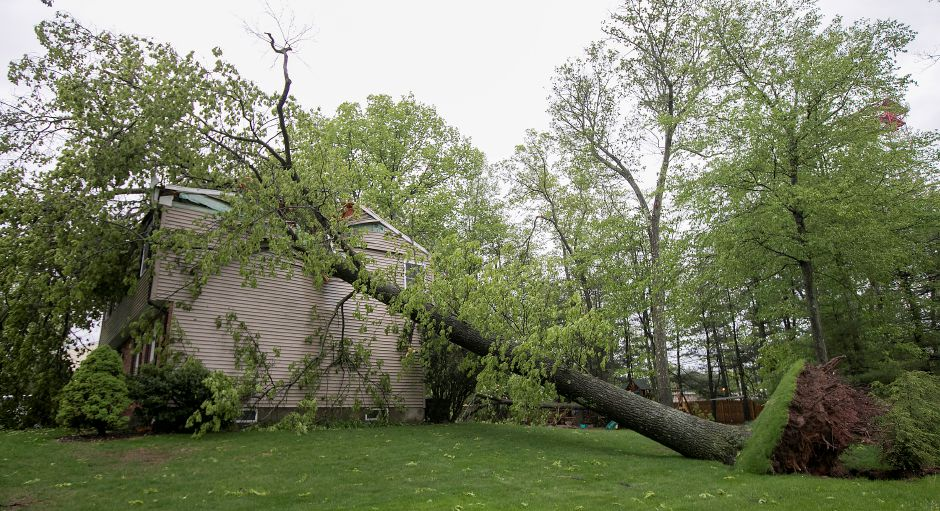 A house at 125 Bellamy Rd. in Cheshire sustained heavy damage from a large tree that fell during Tuesday