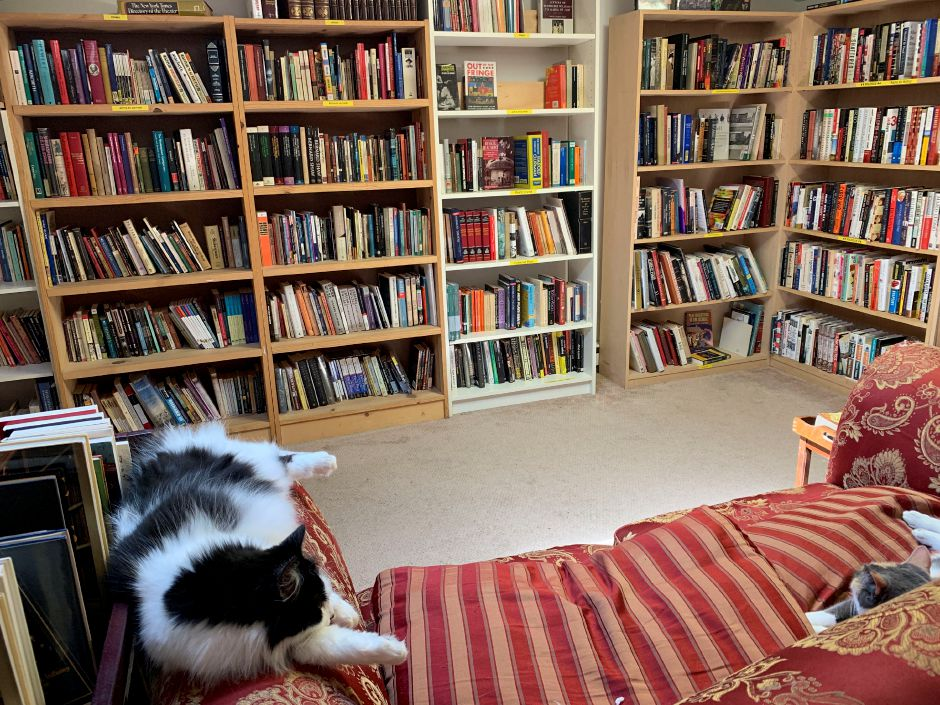 Friendly cats nap in the Book Barn