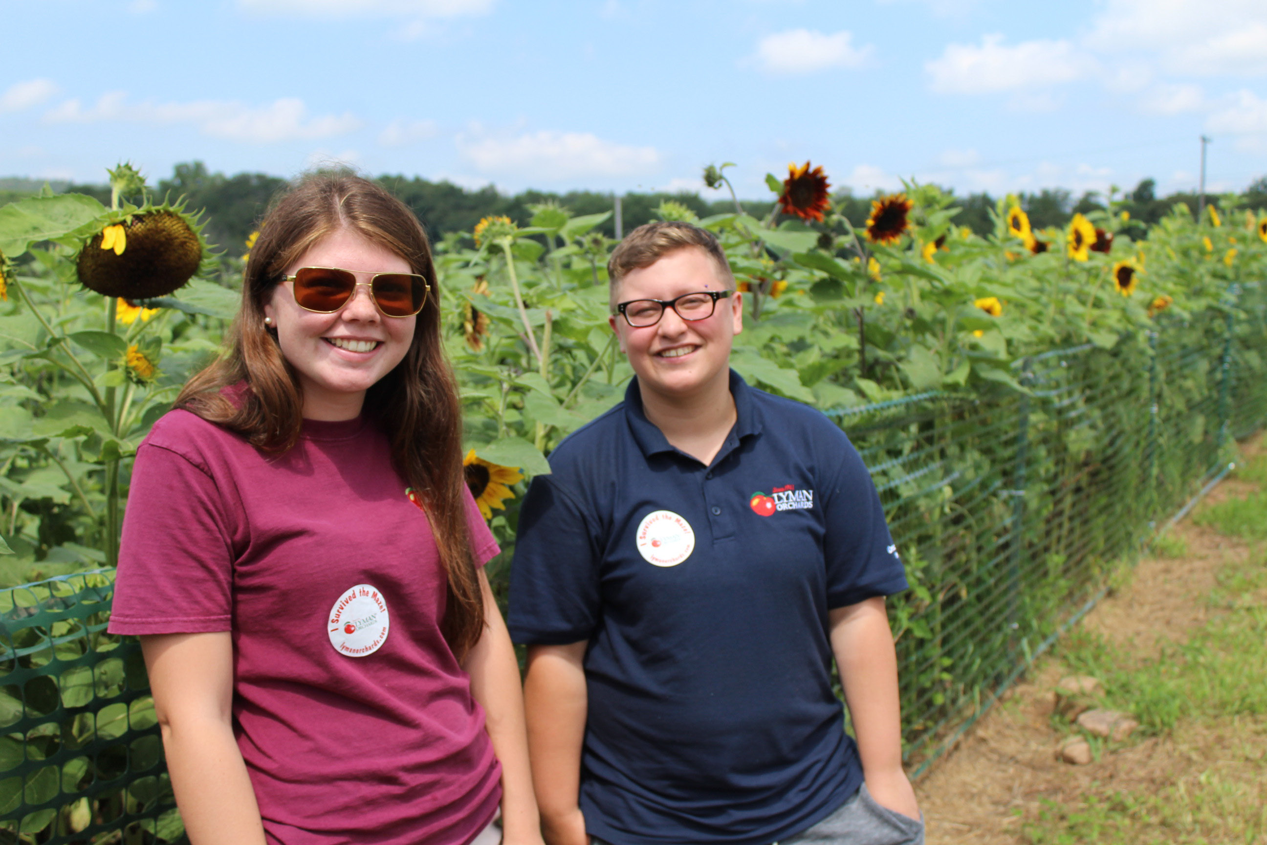 Employees at Lyman Orchard welcome guests at the sunflower maze.