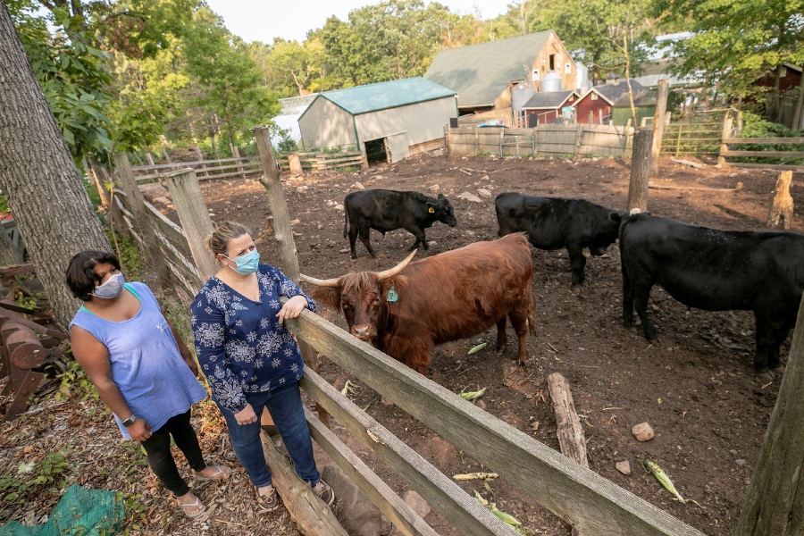 Priya Karabin, left, and Stormie Karabin watch over cows at Karabin Farms, 894 Andrews St., Southington, on Wednesday.
