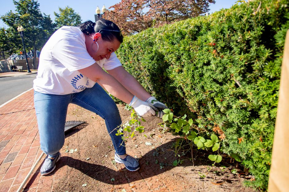 Rebekah Larsen, Key Accounts Coordinator at the Record-Journal, tugs weeds by the Meriden Y Arts Center Sept. 17, 2019 as part of a group from the Record-Journal taking part in the United Way Day of Caring. | Richie Rathsack, Record-Journal