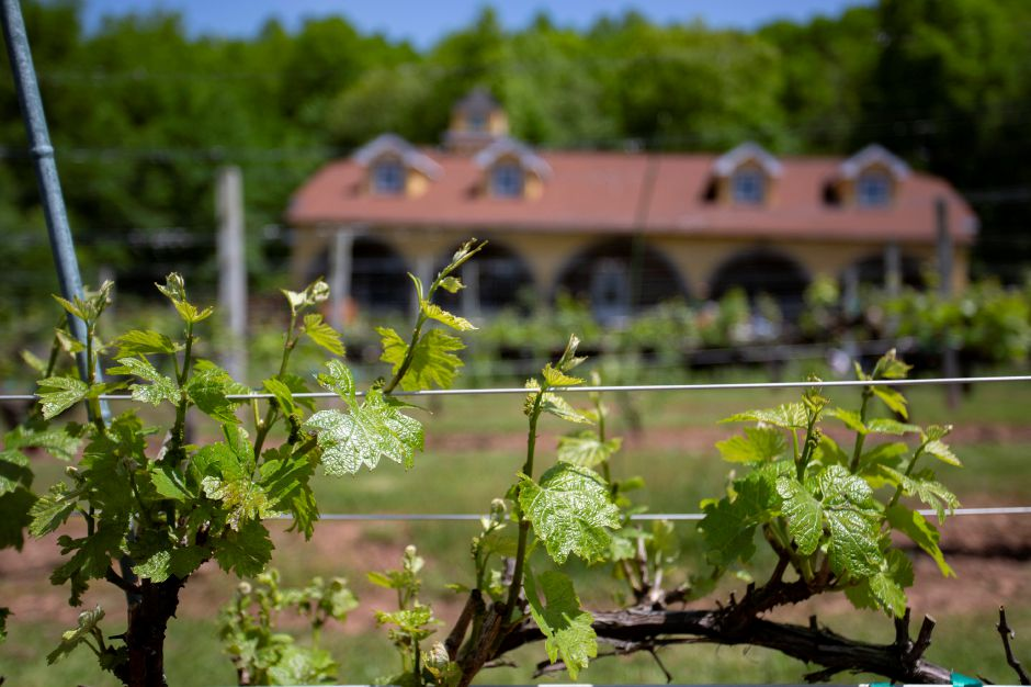 Paradise Hills Vineyards in Wallingford May 24, 2018. | Richie Rathsack, Record-Journal