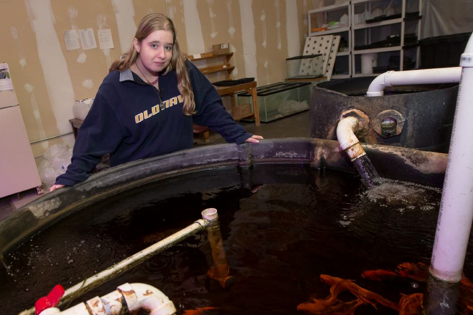 Sarah Putterman check the fish tank in the Aquaponic system Tuesday at the MidState Arc in Meriden October 31, 2017 | Justin Weekes / For the Record-Journal