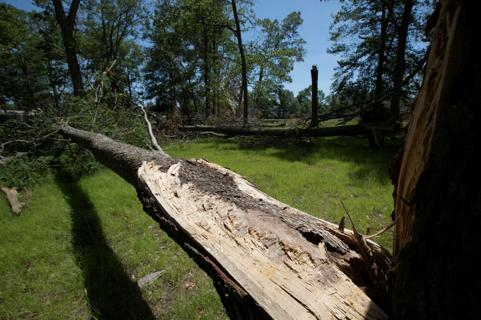One of many snapped tree limbs at Mischelle & Kristine Pire Memorial Park on Birch Drive in Wallingford, Tuesday, June 12, 2018. Teams from the Federal Emergency Management Agency visited Wallingford Tuesday morning to survey the damage from the May 15 storm. Dave Zajac, Record-Journal
