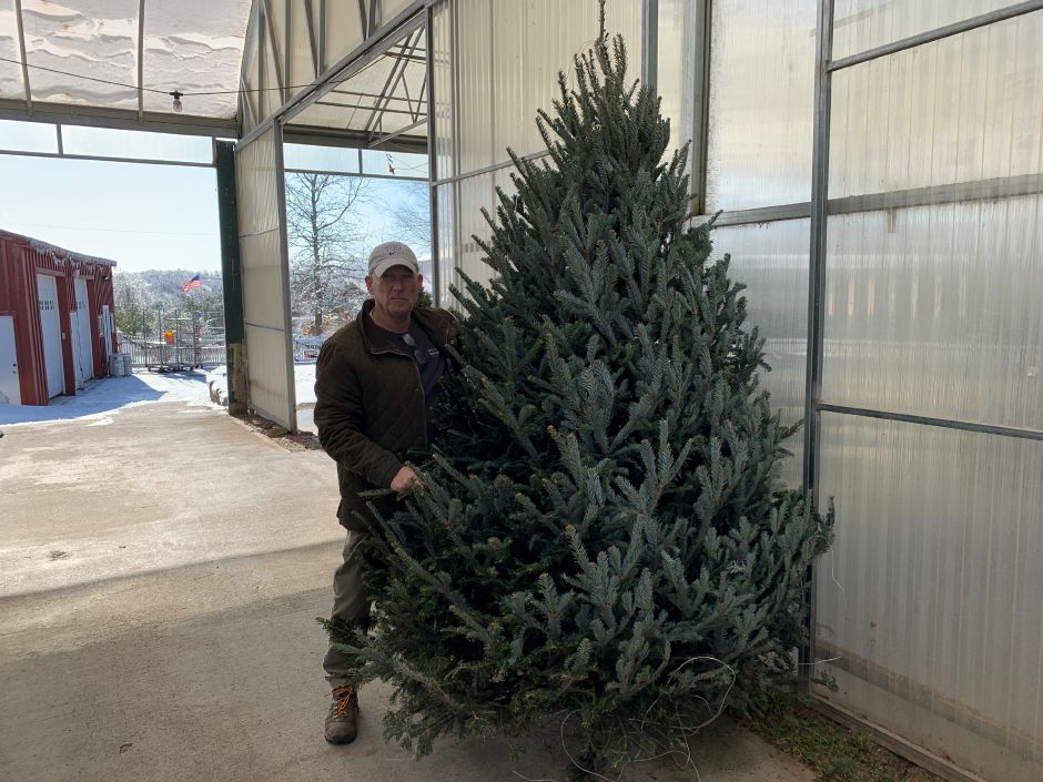 Paul Schatzman, of Country Flower Farms in Middlefield, holds up one of his pre-cut balsam firs. Despite a national shortage of Christmas trees, Schatzman didn