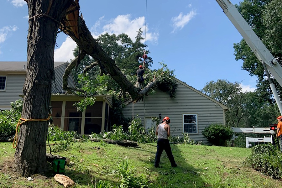 Crews prepare to remove a large tree from the roof of Matt Fitzgerald's residence on Nob Hill Road in Cheshire on Wednesday. Photo courtesy of Matt Fitzgerald