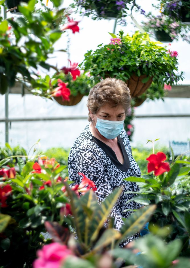 Dori Hassianger, of Wolcott, browses the flower selection in a greenhouse at Tower Farms of Cheshire on May 17, 2020. Nurseries saw a spike in activity as warm weather brought locals out of quarantine to get a start on decorating their gardens and homes. | Devin Leith-Yessian/Record-Journal