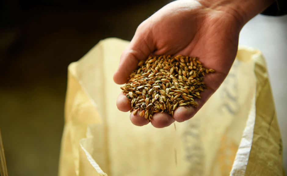 Brewer Mike Wilkie holds a handful of grist, grain that is ready to be grinded and used to make beer at Kinsmen Brewing Co. in Southington on Jan. 15, 2020. | Bailey Wright, Record-Journal