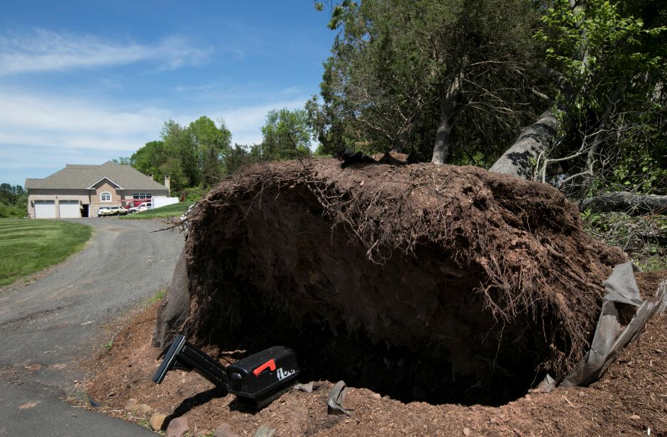 A mailbox under a fallen tree at a Northford Road residence in Wallingford, Monday, May 21, 2018. Last Tuesday