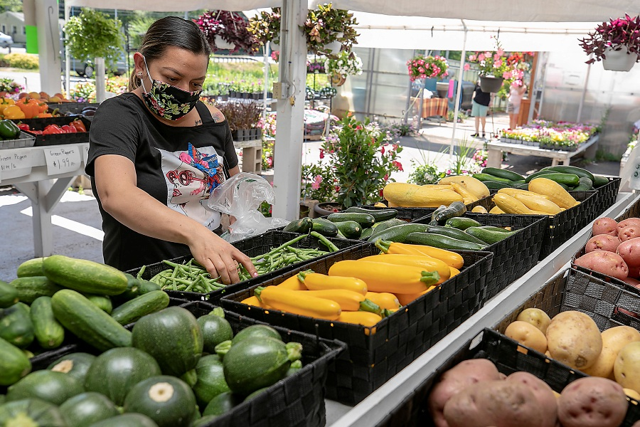 Maria Diaz, of Waterbury, picks up string beans on Thursday during a visit to J.C. Farm and Greenhouses at 385 Wallingford Road in Durham. J.C. Farm and Greenhouses is the largest vendor at the seasonal farmers market in Meriden. Dave Zajac, Record-Journal