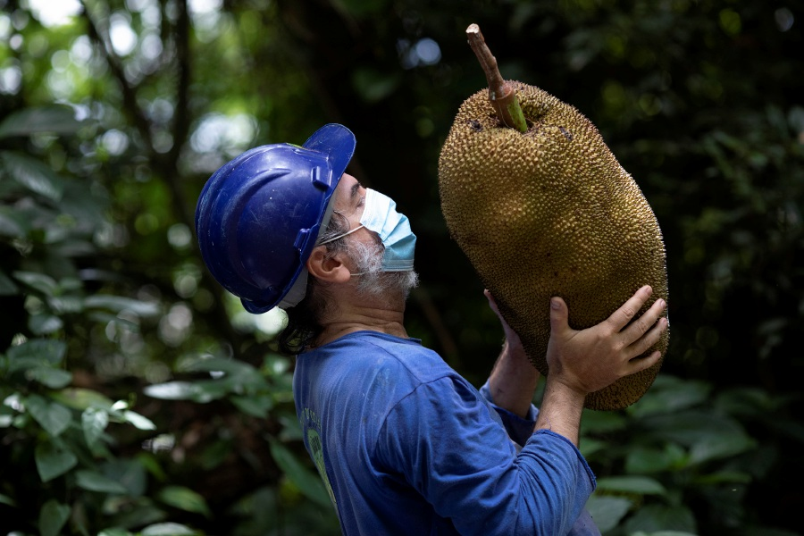 Pedro Lobao holds a jackfruit he harvested on the grounds of the state