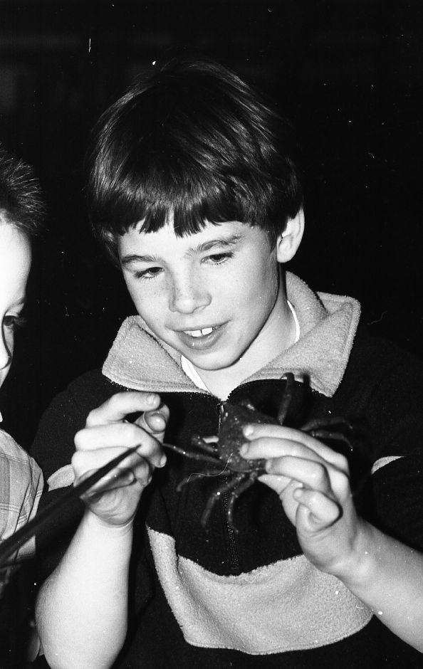RJ file photo - Moses Y. Beach second-grader Jonathon Passmore examines a spider crab during a program that featured 15 species of sea creatures, April 1989.