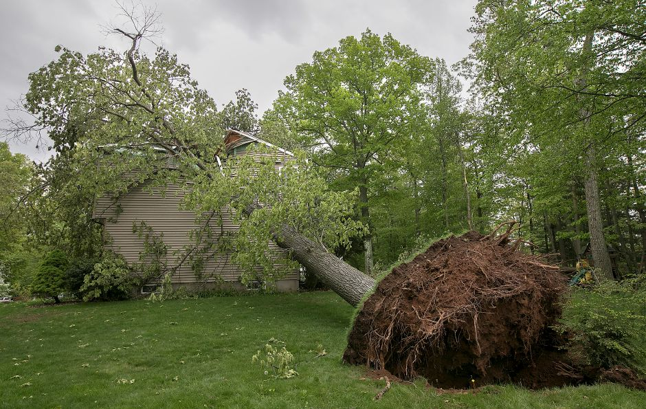 A fallen tree heavily damaged this home at 125 Bellamy Rd. during Tuesday