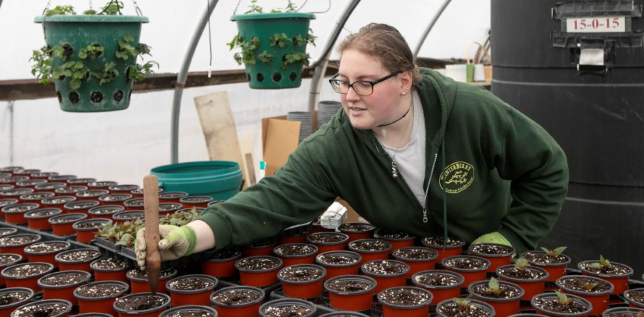 Associate grower Hannah Winzler uses a stake on Wednesday while potting SunPatiens at Winterberry Gardens in Southington. Dave Zajac, Record-Journal