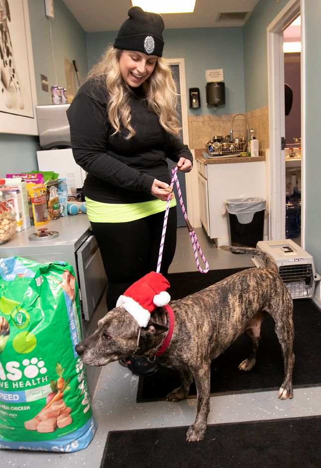 "Pit bull ""Bud"" wears a Santa cap while hoping for treats from Katie Ehlers, animal control officer, at the Municipal Animal Shelter in Wallingford, Fri., Dec. 13, 2019. Shelter staff have been posting profiles and photos of each animal on Facebook, along with what they want for Christmas. The public is invited to visit the shelter, 5 Pent Road, from 11 a.m. to 2 p.m. Dec. 24 to spend time with the animals and drop off gifts. Dave Zajac, Record-Journal"