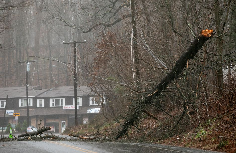 A portion of West Main Street was closed after a large tree fell on wires approx. a quarter mile north of Graveline Avenue in Meriden, Mon., Nov. 30, 2020. Dave Zajac, Record-Journal