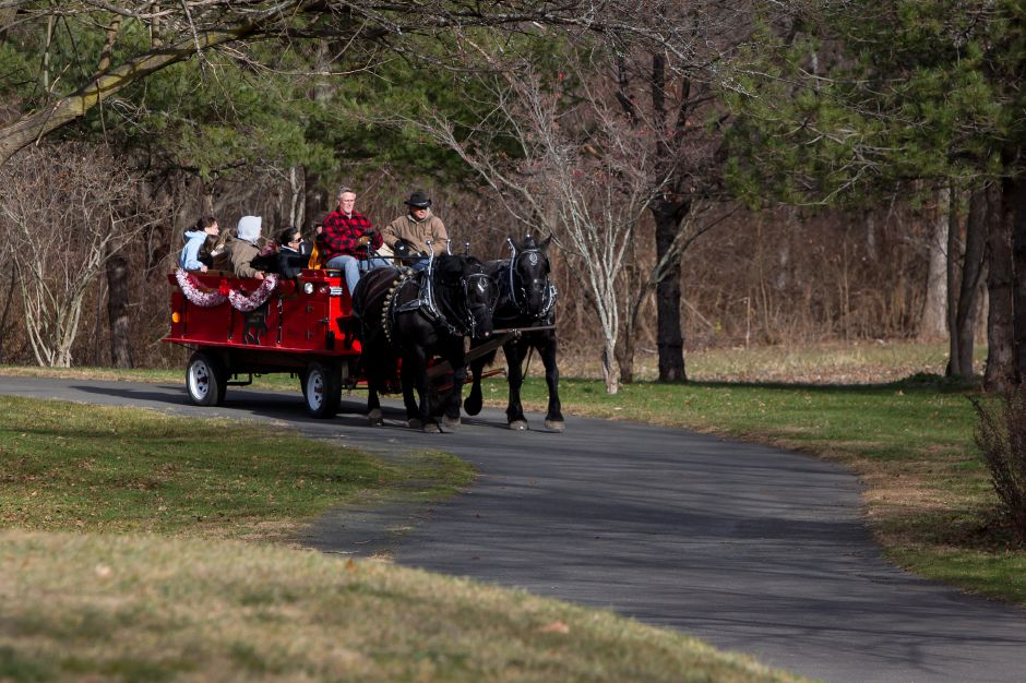 "Carl Lado right and Terry Joseph pilot ""Dexter"" and ""Dolly"" as they pull the Cider Knoll Farm's carriage ride in the  Holiday Celebration at Lakeside Park in Wallingford on Nov. 27, 2016."