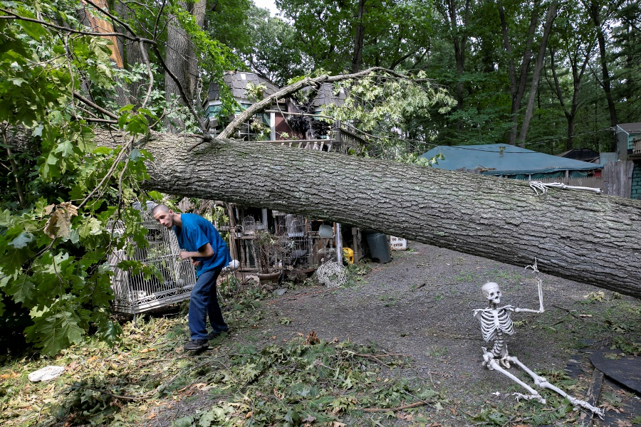 Jason Libby, of Wallingford, ducks Friday under a fallen tree that damaged props at the Trail of Terror in Wallingford. The tree was one of several that came down over the popular haunt during Tropical Storm Isaias. Libby is a volunteer and actor at the trail. The trail is expected to open as planned this year. Photos by Dave Zajac, Record-Journal