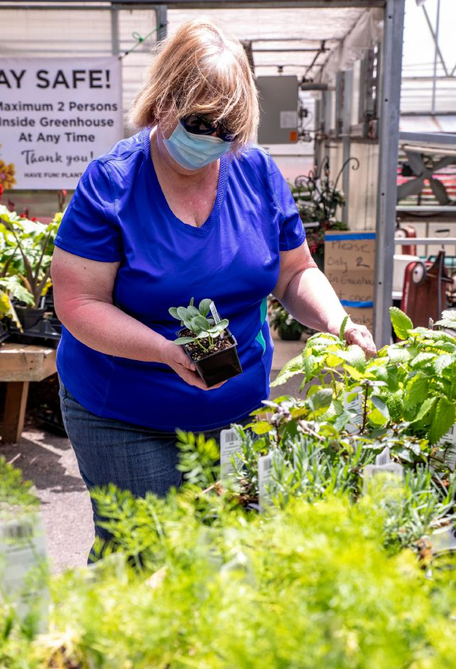 Nancy Losek, of Wallingford, looks through plants at Geremia Farms on May 17, 2020. Nurseries saw a spike in activity as warm weather brought locals out of quarantine to get a start on decorating their gardens and homes. | Devin Leith-Yessian/Record-Journal