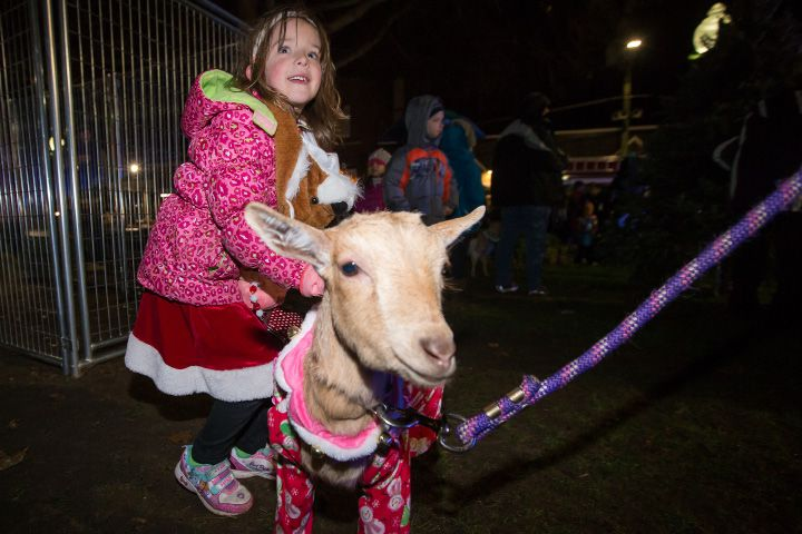 "FILE: Willa Chmura, 6, of Southington pets ""Petunia"" Friday during White Christmas in the Community in Southington. Dec. 2, 2016 