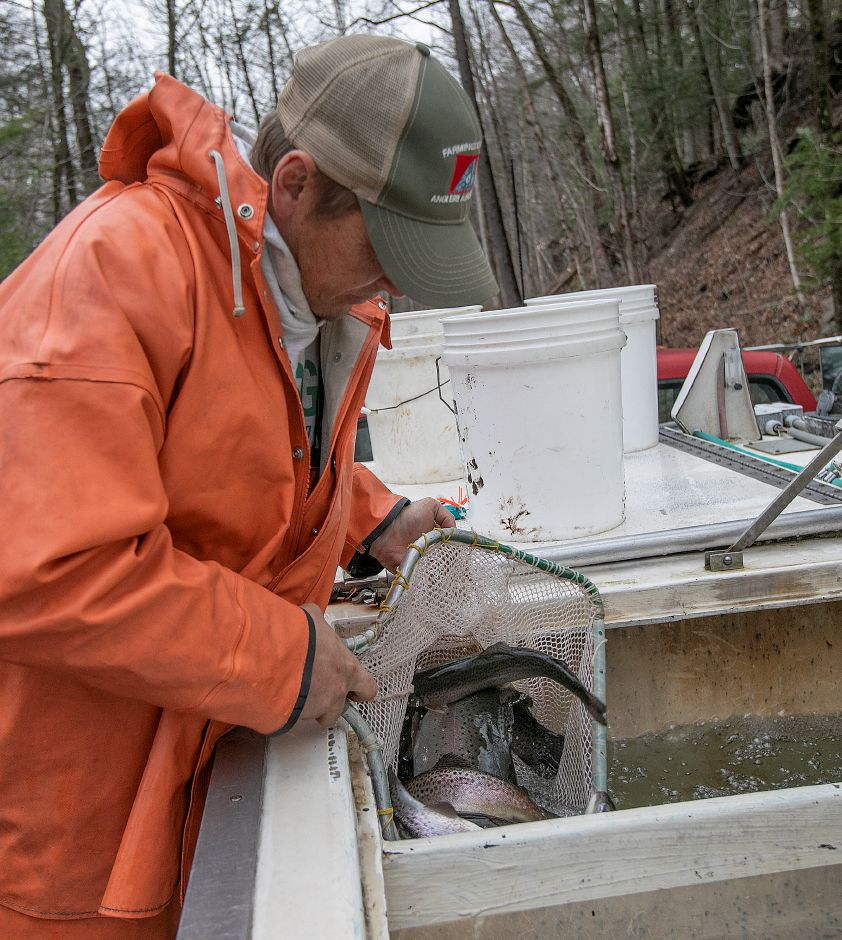 Brian Harding, from Bethlehem based Harding Trout Hatchery, nets rainbow and brown trout from a tank for releasing into the Quinnipiac River during the annual fish stocking along the Quinnipiac River Gorge Trail in Meriden, Mon., Apr. 8, 2019. Dave Zajac, Record-Journal